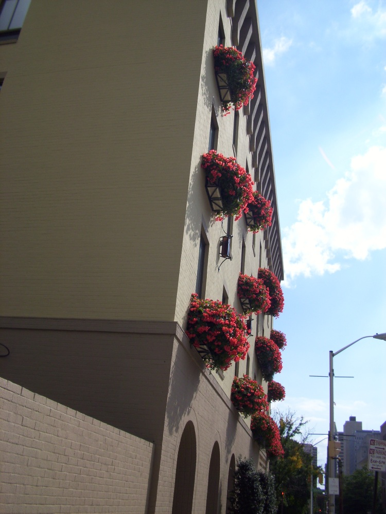 By: Gabriela Yareliz St. Paul Street stroll. I love these window boxes with flowers spilling over.